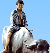 A boy riding in a Buffalo